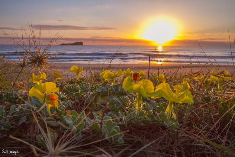 mudjimba-beach-sunrise-flower_1-copy